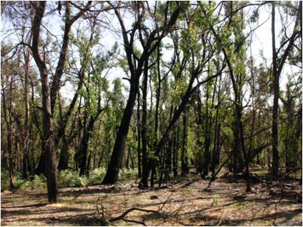 List of threatened flora of Australia